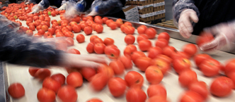 Industrial Photography Tomatoes Produce