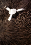 Coffee Beans Photography