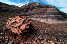 Petrified Forest National Park Arizona Nature Landscape Photography
